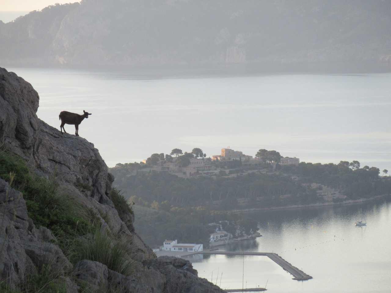 The mountain goats make for good company.